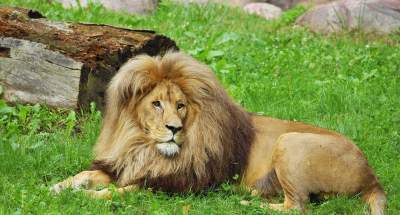 safarie